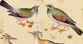 """The Canticle of the Birds"" by Attar – Diane de Selliers Editeur"